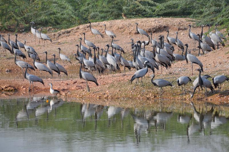 Bird sanctuary1