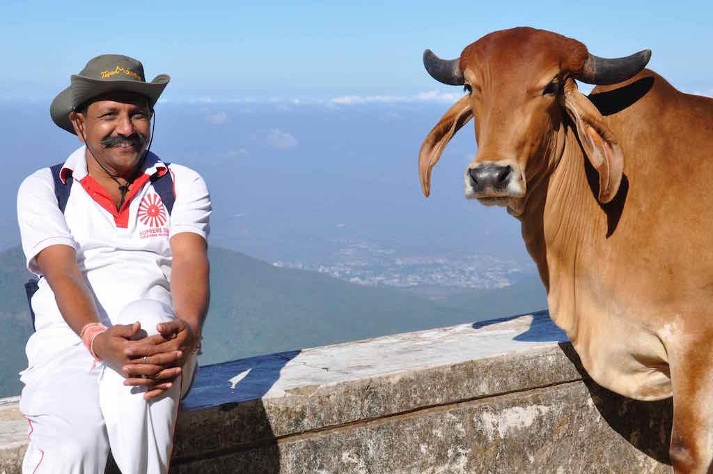 Raj and cow
